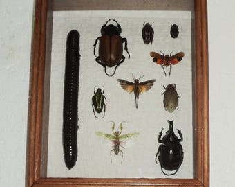 A collection of 10 exotic insects....Very impressive work!