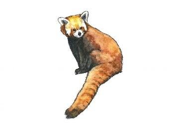 red panda watercolor giclée print