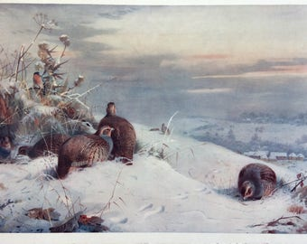 "21"" x 13"" Archibald Thorburn Fine Art Society Print, Partridges in Snow"