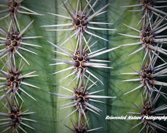 Cactus of Baja Photo - 2 of 4 - 12 x 12 Matted Original Photography  - Reclaimed Wood Frame