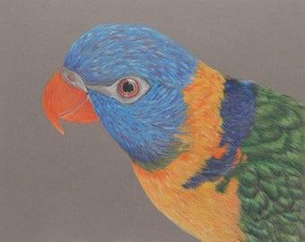 Bird Wall Art - Colorful Wall Art - Lorikeet - Bird Art - Bird Drawing - Rainbow Lorikeet - Bird Wall Decor - Colorful Art - Bird Artwork