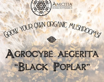 Organic Black Poplar Sawdust Spawn (Agrocybe aegerita) LIVE MYCELIUM - 50g *PDF Book Included