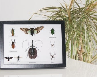 Large frame of naturalized insects