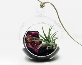 Celestial Air Plant Terrarium Kit - Gift Boxed