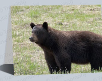 Black Bear Portrait Greeting Cards, Birthday Cards, Notecard, Black Bear Art, Traveling Goose, Blank Cards, Photography Cards, Art Cards