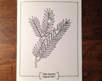 Botanical Illustration Renewal Card * Yew Branch * Adult Coloring Meditation Art