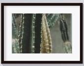 Cactus Printable-Digital Download-Cacti Print-Scandinavian Wall Art-Desert Cactus-Cactus Printable Art-Nature Print-Desert Printable Art