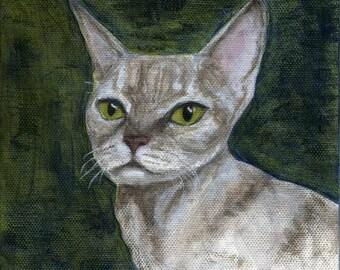 Devon Rex Cat original oil painting framed