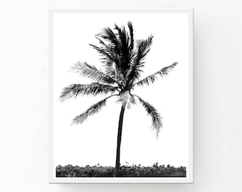 Palm Tree Print - Black And White Art, Modern Minimalist, Printable Wall Art, Digital Download, Beach Photography, Coastal Poster, Palm Tree