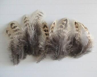 10 beautiful feathers pheasant 10 cm 11 cm 12 cm