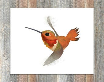 Rufous Hummingbird Bird Print