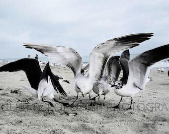 """Seagulls """"Seagull Beach Chat Series-#703"""", Canvas"""