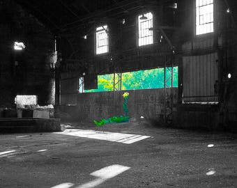 "Abandoned Sugar Mill - Photo Art Print - ""FORSAKEN FLOWER"""