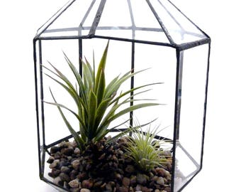 Glass Bird Cage Black Lined Terrarium