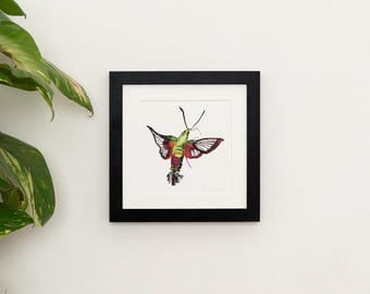 Hummingbird moth illustration