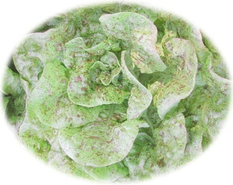 Speckles Butterhead Heirloom Lettuce Seeds - NON GMO - 400 plus seeds