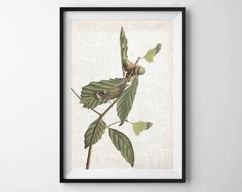 Audubon Bird Print, PRINTABLE ART, Wall Decor, Botanical Print, Bird art, Vintage Print, Poster, Nature print, Downloadable Art, Flower Art