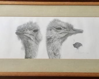 R. Luney Lithograph of Ostriches (1979) 41 of 450 Pristine