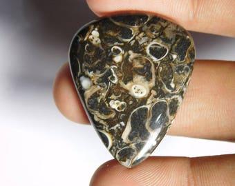 Wow! Turritella Agate Gemstone,Turritella Agate Cabochons,Turritella Agate Loose stone,Turritella Agate Loose gemstone 36Cts.(35X28)MM