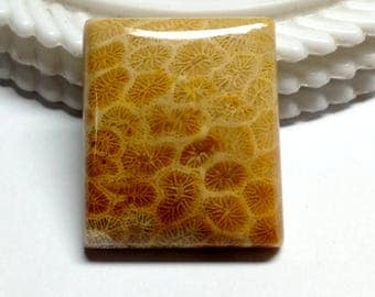 Fossil Coral Rectangal Designer Cabochon,Size 27x23x6 MM,Fossil Coral Loose Gemstone,Smooth Cabochons.Natural Gemston.