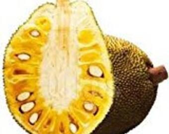 Fresh Whole Jackfruit -12-15 LBS