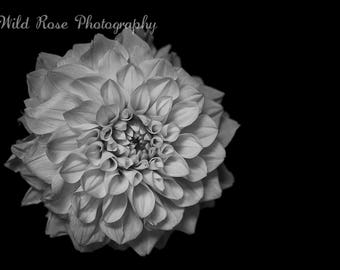 Black and White Delilah