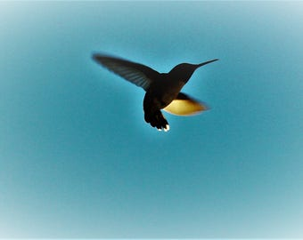 This is a beautiful Photo-Art image by Unoli Edochi. Hummingbird. It is available as a limited edition image. Only 10 copies will be made.
