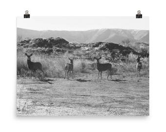 High Desert Deer