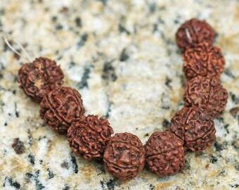 Large 15mm Rudraksha Seed Prayer Beads ~ 9 beads