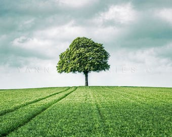 Green tree photography, French countryside, Green field, Nature print, Spring photography, Tree print, Landscape photography