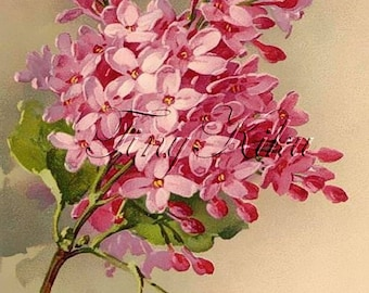 Single PINK LILAC, Catherine Klein Vintage - Waterslide Decal. Decal Sheet Size Options