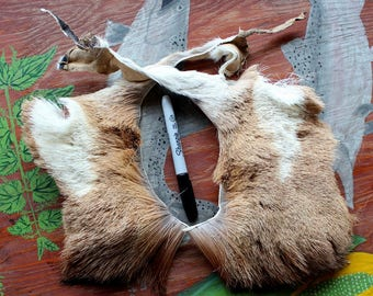 Two pieces of tanned pronghorn antelope hide fur pelt for crafts, display, more DESTASH