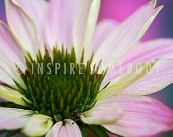 HARMONY 8x12 Pink and Ivory Cone Flower Fine Art Print