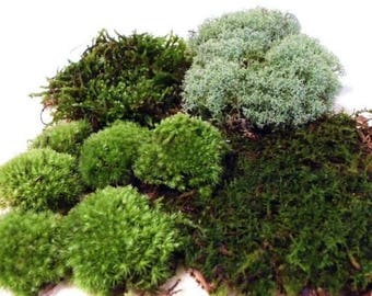 Save25% Live Terrarium Moss-Quart Bag of 4 moss varieties-Pillow moss-reindeer moss-fern moss-feather moss-Terrarium supplies