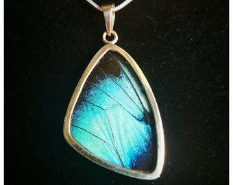Real Butterfly Wing Jewelry Pendant Necklace Sterling Silver Morpho Deidamia XL **QUALITY CRAFTSMANSHIP**