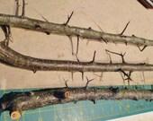Custom for Ken, Blackthorn Wood, Wand Carving Wood, Wild Plum Wood, Wood Craft Supply, Magical Wand Wood, Wicca Ritual Wood, Sloe Blackthorn