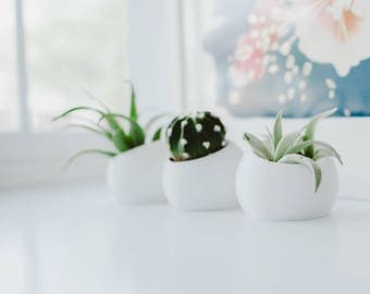 Mini Ava set of Three - Air Plant/ Mini Succulent Planters