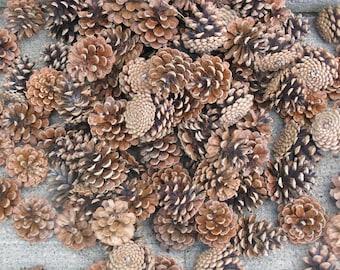 large lot 200 ponderosa pinecones larger sizes rustic weddings Christmas crafts fall decorating