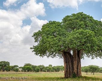 Africa,Tanzania,Tree of Life,Oversize,Wall Art,Home Decor,Office Decor,Safari,Baobab Tree,Clouds,Blue,Green,Sky