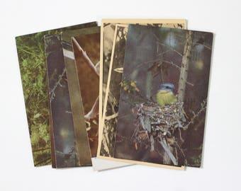 8 Vintage Australia Birds and Animals Used Postcards