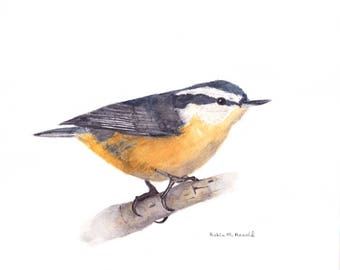 Nuthatch Print of Original Watercolor Painting, animal,bird art, wildlife,nature,bird lover,red breasted nuthatch,  birdwatcher