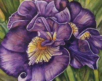 Print of purple iris watercolor