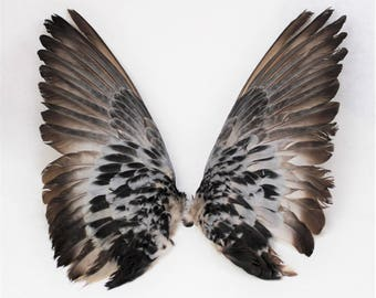 "11-12"" Pigeon wings Taxidermy bird avian pair feathers feather sets open wings"