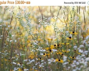 ON SALE Brown Eyed Susan, Field of Flowers, Flower photograph, Flowers, Wildflowers, Nursery Room Decor, Nature Prints, Large Wall Art, Yell