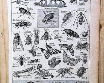 French  Dictionary Illustration, insects, 1922, craft, poster, old book,enthomology, arthropodes