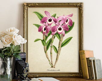 Botanical Print, Orchid Print, Flower Art Print, Purple Orchid Giclee, Home Decor, Orchid Art Print Decorative Orchid Art Reproduction FL139
