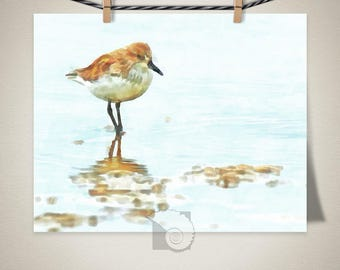 Bird Art, Sandpiper print, coastal birds, coastal art print, bird print, watercolor, painting, art print, North Carolina, beach art