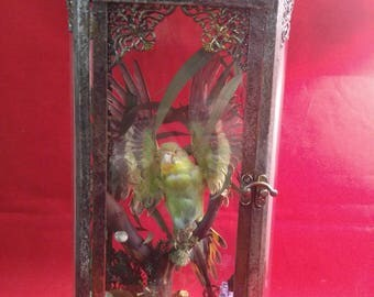 Antique Victorian Style Taxidermy Green Parakeet/Budgie Bird Lighted Display