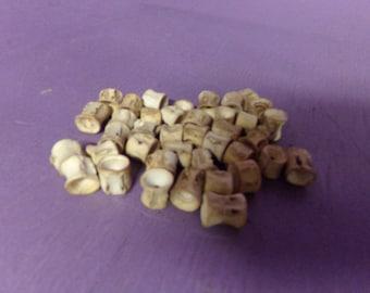 40 Real animal fish shark vertebrata bone spine shell aquatics life necklace part piece