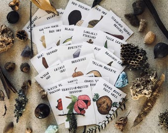 Charlotte Mason Nature Study Collection with ID Cards, Real Nature, Science Kit, Homeschool Matching Game, Reggio Emilia, Montessori